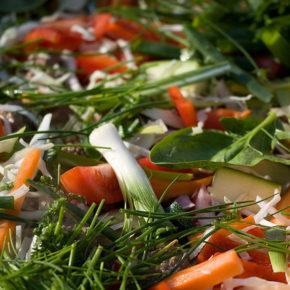 pate de legume
