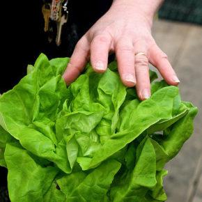 Salată verde, o multitudine de sortimente și de beneficii pentru bebeluși și copii