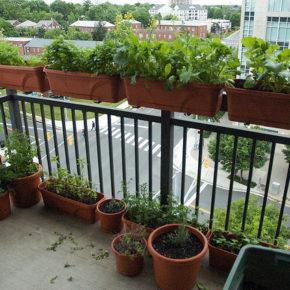 Grădina din balcon