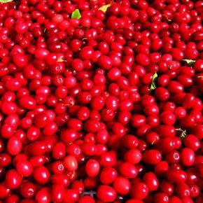 Coarne, fructe de pădure ce previn anorexia