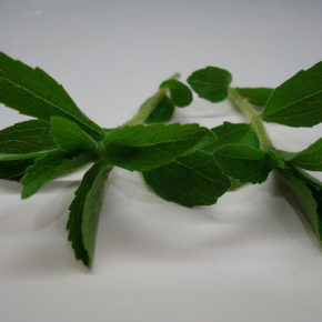 Stevia, zahăr natural