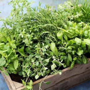 3 tipuri de verdeață care să nu lipsească din bucătărie