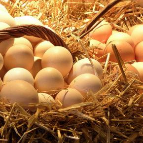 Ou – un aliment esențial în diversificare