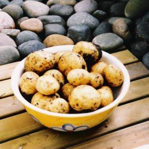 piure de cartofi cu smântână, ou și lapte